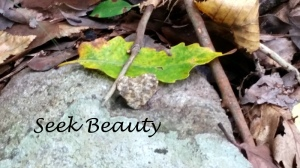 Goal: Seek Beauty